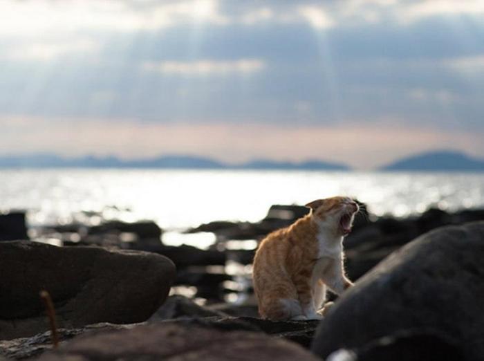 Fubirai,  Gato silvestre de la isla de Japón.
